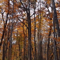 freetoedit photography myclick autumnleaves woods