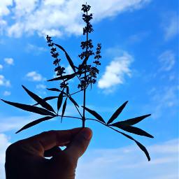 goodmorning sky flowers bluesky beautiful freetoedit