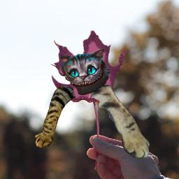 freetoedit daft fun silly cat ircautumnleaf