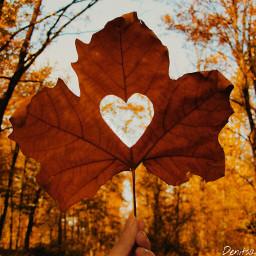 freetoedit denitsapavlova denaya_p leave autumn