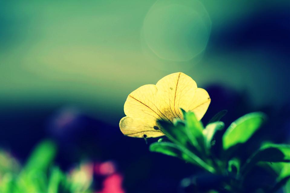 #flower #nature #colorful #macro