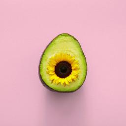 freetoedit avocadoday sunflower realpeople photography