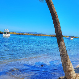 home blue beach peaceful palmtree