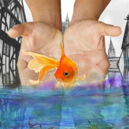 freetoedit hands water goldfish ecinmyhands
