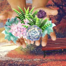 freetoedit succulent hands plants autumn ecinmyhands