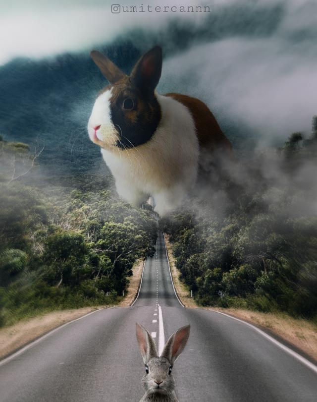 ▶️giant rabbit😄🐇  #awesome_surreal #theuniversalart #edit_greatshots #edit_grams #thegraphicspr0ject #enter_imagination #VisualMobs #Visual_Creatorz #edit_perfection #xceptionaledits #sombresociety #hashtagler #creartmood #creative_ace #myedit #nature #interesting #rabbit #animals #surreal #surrealism #fantasy #fantastic #photography #freetoedit