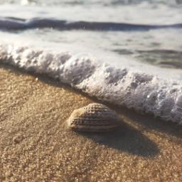 freetoedit lowangle beach shell wave