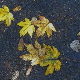 comiceffect foliage autumn yellow leafs freetoedit