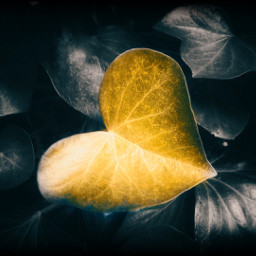 freetoedit leaf heartshapes heart foliage
