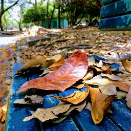 freetoedit autumnleaves autumncolors autumm leavesfall