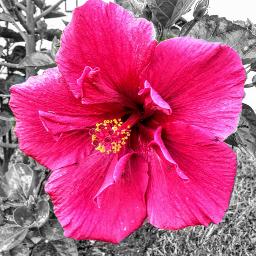 freetoedit photographer photography flowers petalsandblooms