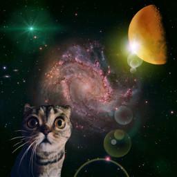 freetoedit space cat