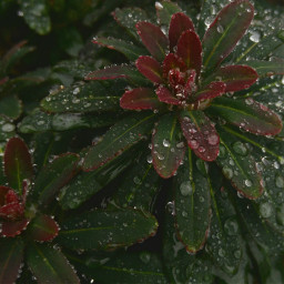 raindrops dew plant redgreen complementary