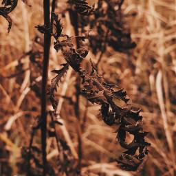 freetoedit leaves dried ornamental nature