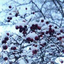 photography snow winter pccolorwhite colorwhite