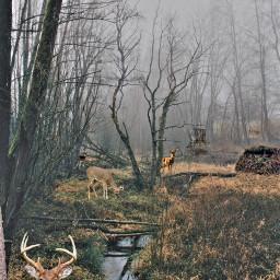 freetoedit deer deerhunting outdoors woods