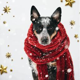 irccozydog echolidayoutline christmasstarsbrush snowbrush wintertime scarf