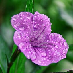 rain drops dropsofrain gotasdelluvia lluvia