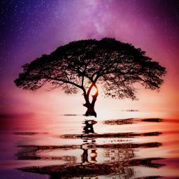 freetoedit tree galaxy stars sunset