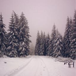 freetoedit winterwonderland winter snow fog pcsnow pcoutdoorwinter