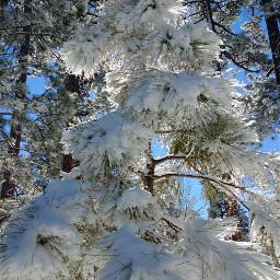 wintertime snowtree nature mountainlife