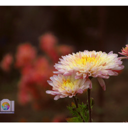 freetoedit nature naturephotography flower flowersofinstagram