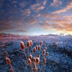 freetoedit remixit clouds naturephotography landscapephotography sunrise fallcolors autumn landscape