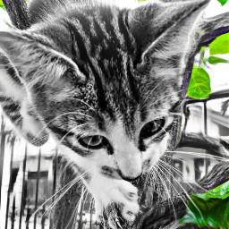 pictures catpicture instagram instacats pet