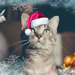 freetoedit cat mouse santahat garland