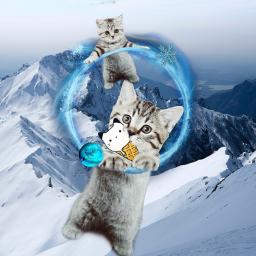 cat cats wow cute socutebaby freetoedit srcalternateuniverse