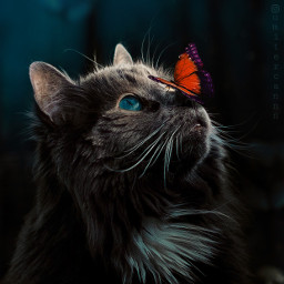 myedit cat animals butterfly photography freetoedit