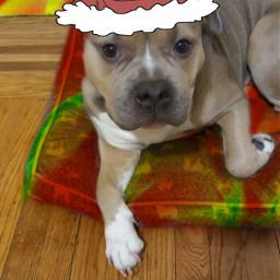 freetoedit mymood colorflaremask christmasstickers modeldog🤗⭐🎄🎅🏼