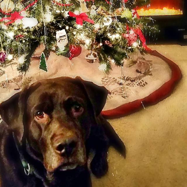 #freetoedit #dogsofpicsart #merrychristmas #christmastime #cozy