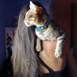 freetoedit pcfaceless faceless love cat