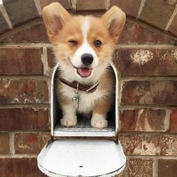 freetoedit dog puppy mailbox