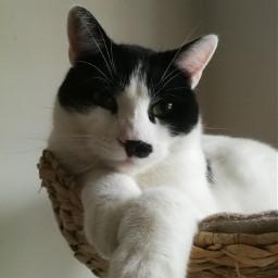 pchappypetday happypetday cat catsofpicsart cats pcindoor