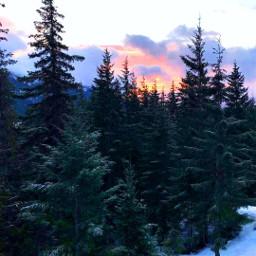 freetoedit sunrise nature trees mountainview