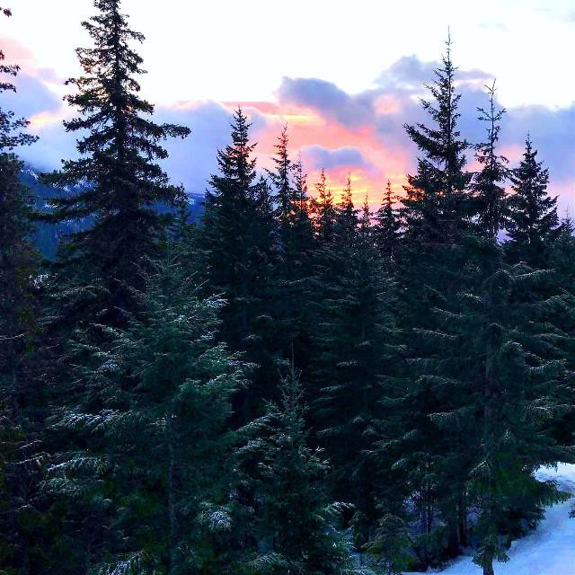 #freetoedit #sunrise #nature #trees #mountainview #shellygienger