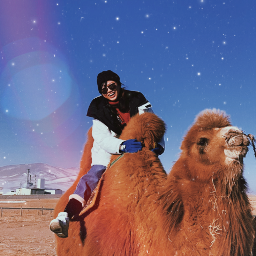 freetoedit mongoliatrip shtatw camel