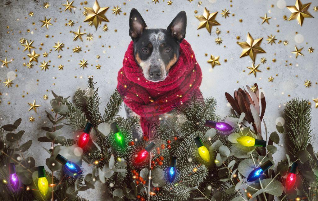Merry christmas doggos 🐶 ❤️ #freetoedit