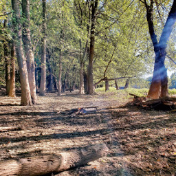 nature forest forestwalk merrychristymas photograph