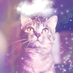 cat cloudy snow freetoedit remixit