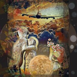aeroplane sky wildlife byebye2018 freetoedit