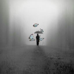 myedit butterfly blue butterflies umbrellas freetoedit