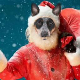 freetoedit natal papainoel cachorro cao irccozydog