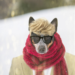 freetoedit irccozydog cozydog