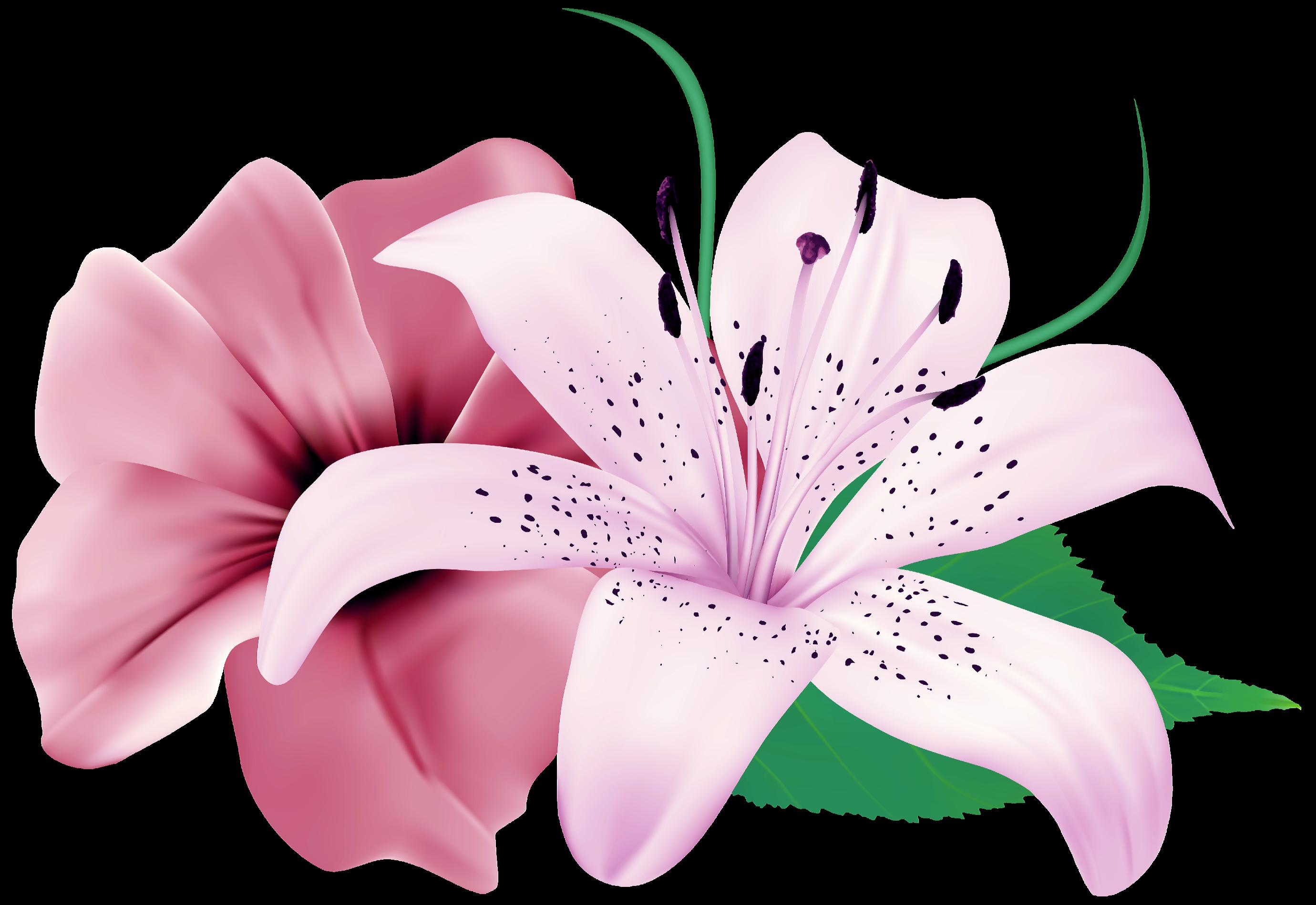 Маленькие картинки цветов на белом фоне