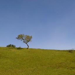 freetoedit pctree tree