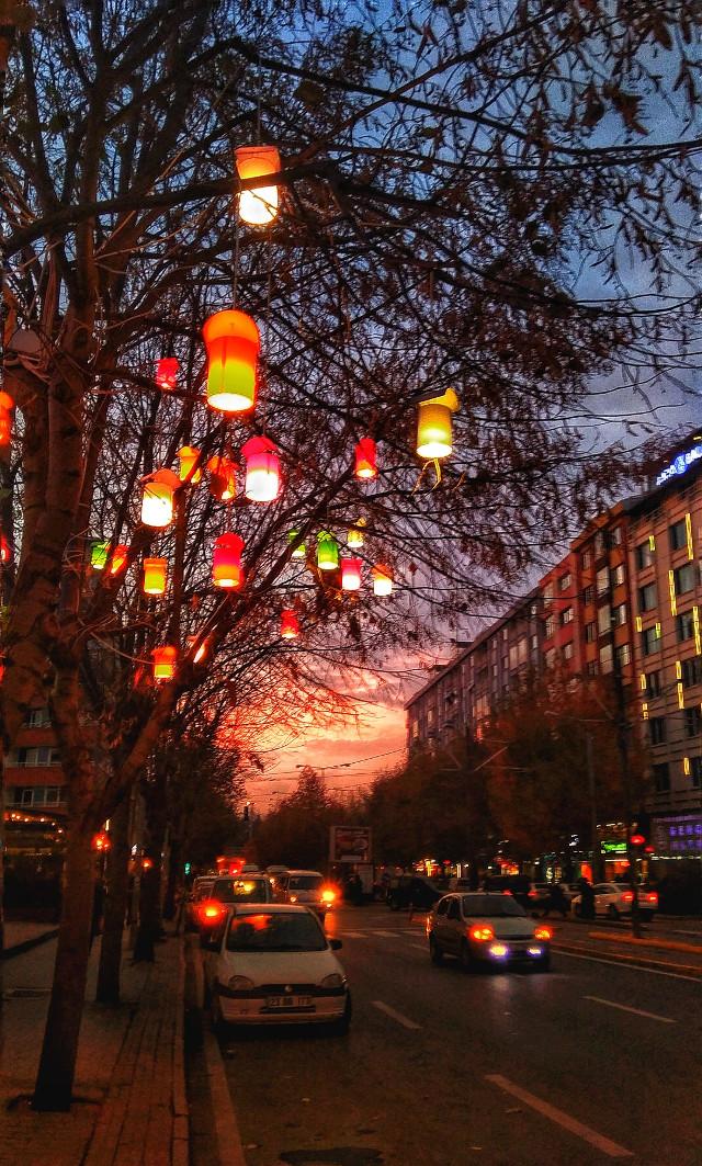 #tree #trees  #freetoedit #ağaç #ağaçlar #city #şehir #light #color #beutiful #photography #photo #foto #fotoğraf #fotoğrafçılık #fotoğrafdelisi