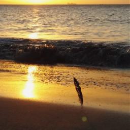 freetoedit sunlight sunset beachlife shoreline